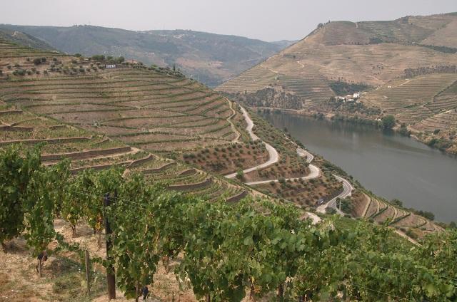 Вот так растет вино на берегах реки Доуру в Португалии. Моя бутылка - урожая 2010 года. Фото сделано тогда же.